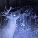John Billiard's Trail Cam Pics