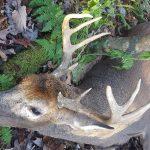 Ken Wallech's Archery 2016 Harvest