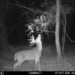 Scott Preston's Trail Camera Pictures