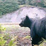 Taylor Early's Bear Spotting